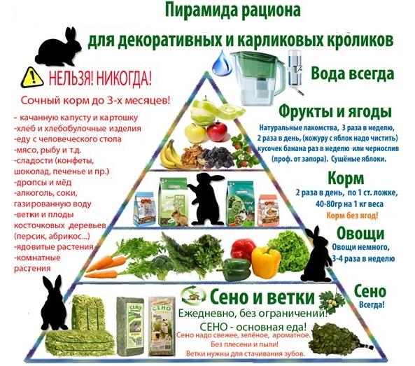 Пирамида рациона кроликов