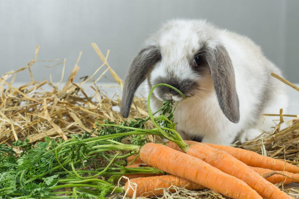 Питание кролика.