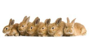 6 кроликов