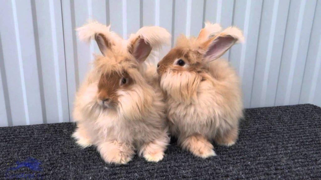 Купать кроликов