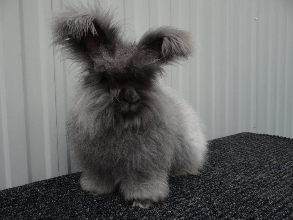 Средства гигиены для кролика