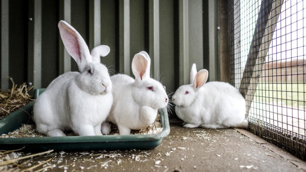 3 кролика в клетке