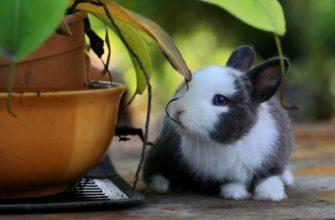 Кролик и цветок